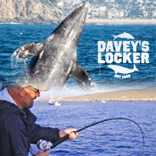 DAVEYS LOCKER SPORTFISHING & WHALE WATCHING